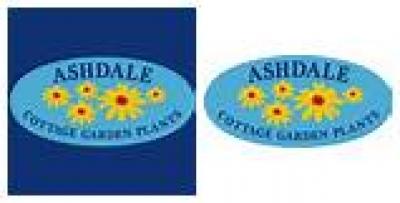 ASHDALE NURSERY