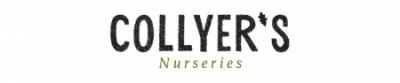 COLLYERS NURSERY & GARDEN CENTRE