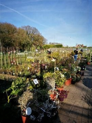 FOL HOLLOW NURSERIES
