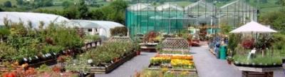 GLYNDWR PLANTS