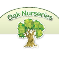 OAK NURSERIES